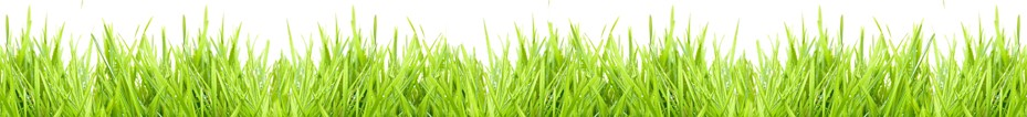 lawn_care_pg_02